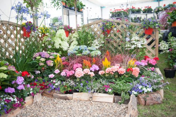 Blooming marvellous and ready for the 142nd annual Driffield Show
